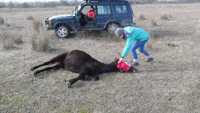 This vet freed this chained horse, not realizing he's about to get the thank you of a lifetime