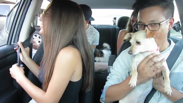 Uber Driver Surprises Passengers With Puppies