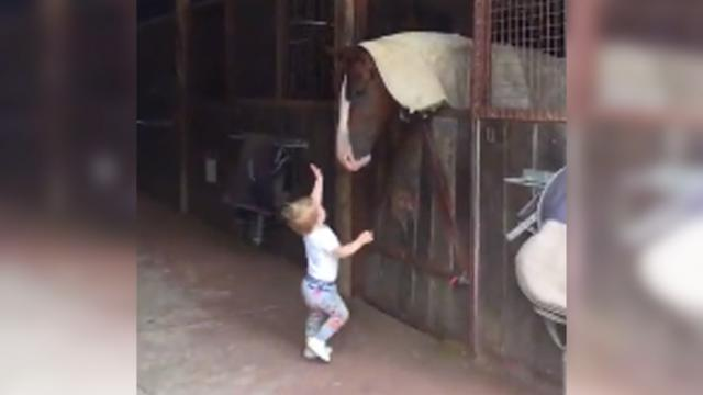 Tiny girl marches up to horse but it's horse's comeback that has mom running for camera