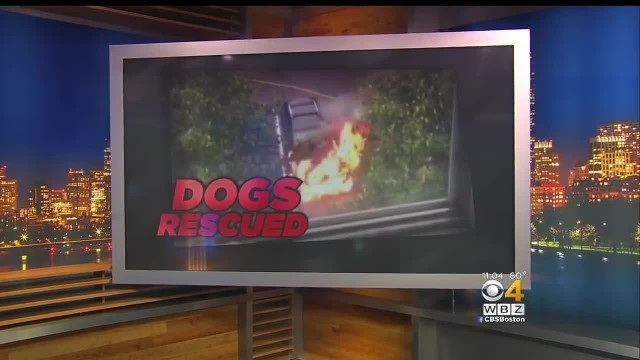 Man sees three dogs trapped in burning car – then it explodes