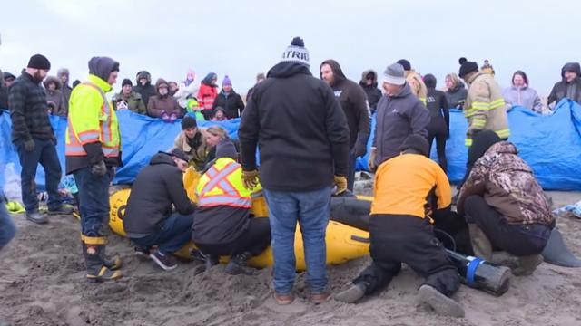 One hundred people urgently work to save beached whale stranded in sandbar
