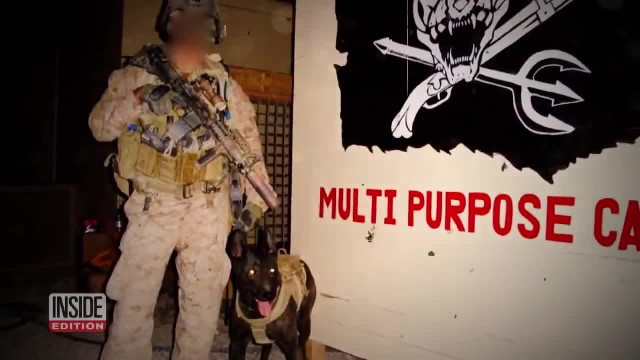 Retired Military Dogs Find New Homes Thanks to This Navy SEAL