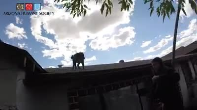 Stray pit bull puppy stuck on roof is so excited to see his rescuers