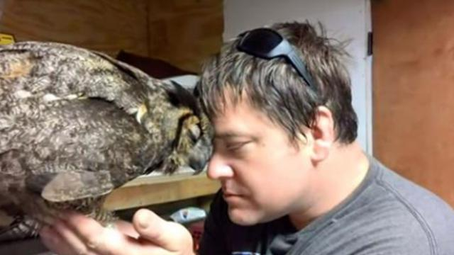 Man rescues owl hit by car, then she thanks him in remarkable fashion