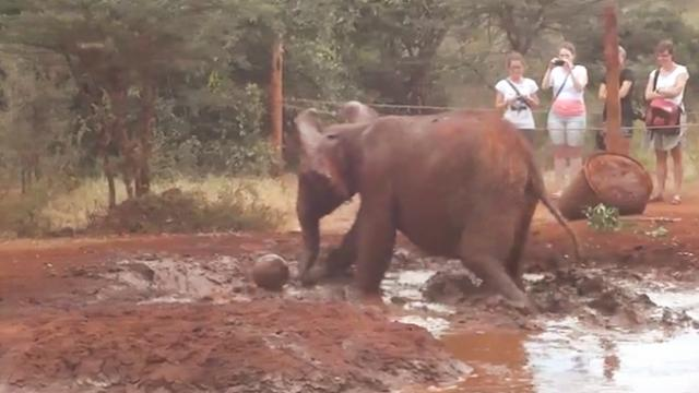 Soccer-mad baby elephant shows off skills with the ball
