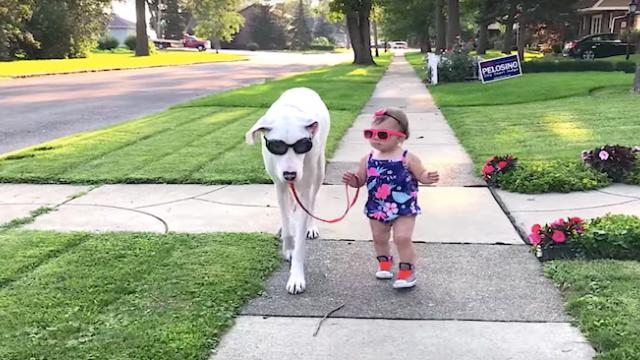 Family rescued deaf and blind Great Dane, now she's a loyal guardian to her cute toddler owner