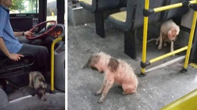 Bus driver sees dogs freezing in thunderstorm, breaks rules and brings them onto the bus