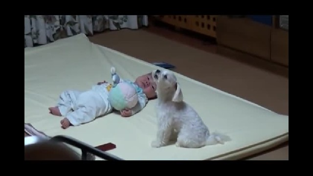 Mom Couldn't Get Baby To Stop Crying – Dog's Special Technique Has Gotten 8 Million Views!