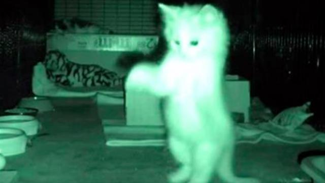 Man left highly amused after watching night footage of kittens