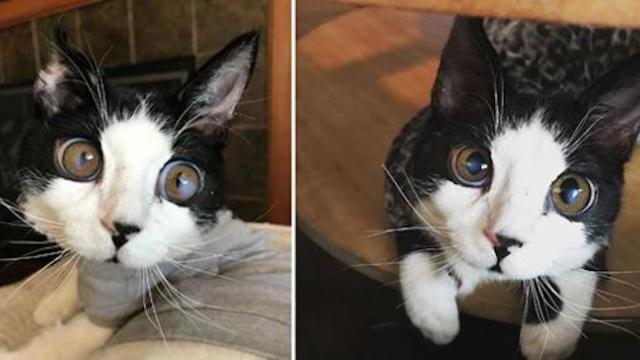 Kitten with huge eyes found abandoned on porch—now, his adorable photos are going viral