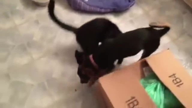 Kitten Huddled Up to Dog and Won't Leave Him Until They are Saved Together