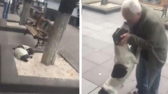 Lost Dog Living On Street Cries With Joy When His Owner Finally