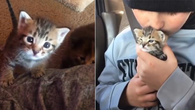 Nobody can figure out frightened kitten's problem, but ten-year-old coy solves it in seconds