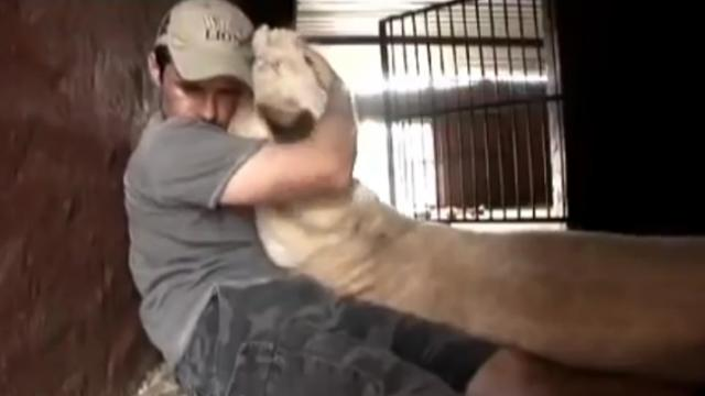 This crazy dude picks up a lion cub, and mother lions reaction caught everyone by surprise.