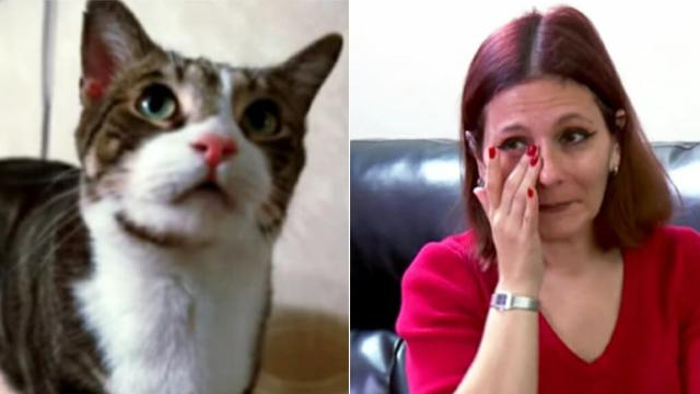 Panicky cat starts acting strangely, leads mom to her daughter's