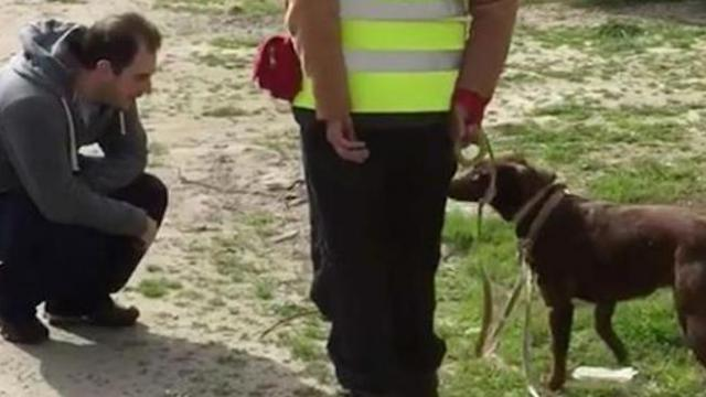 Lost dog has priceless reaction and is almost in disbelief after catching a glimpse of owner