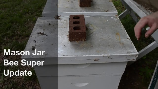 This guy invented a homemade beehive to save the bees, and it's going viral