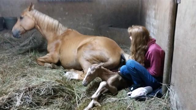 Owners of pregnant horse notice 'strange afterbirth' after delivering beautiful foal