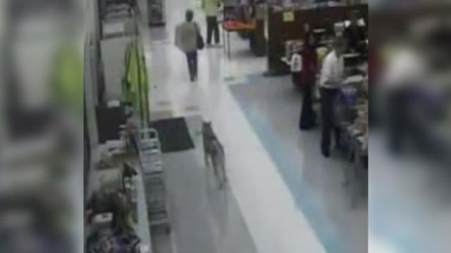 "Security camera catches a dog walking into a store on his ""Special Mission"""