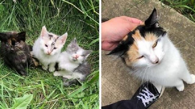 Sray cat walks up to rescuer and leads her to her kittens who need help
