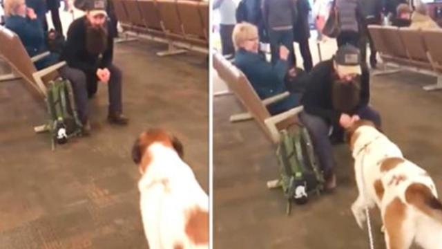 Heartwarming reunion of soldier and his dog melts hearts at the airport