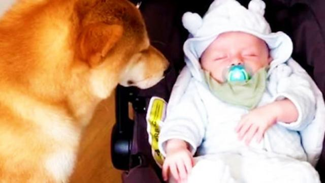Family dog inches closer to newborn, mom catches pup's next move on camera