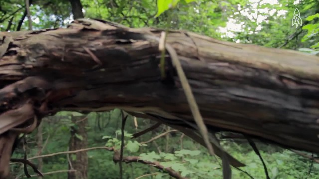 This magical forest touched a grieving family in ways you can never imagine