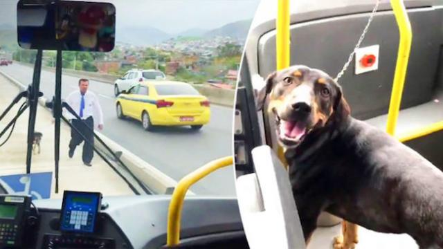 Stray dog trapped in the middle of freeway until a bus driver leaps into action