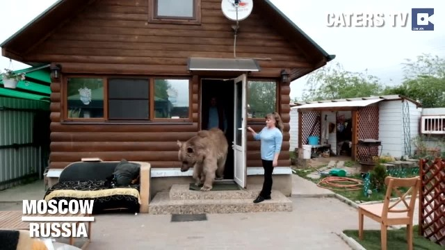 This Russian Couple Never Expected that Rescued Bear will Become Part of The Family