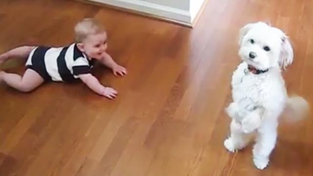 Dog makes baby brother giggle hysterically by showing his amazing dance moves