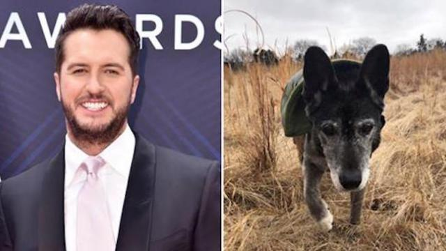 Luke Bryan adopts 18-year-old rescue dog after falling in love with the senior online