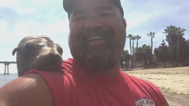 Sea lion jumps on man's kayak and poses for a snap