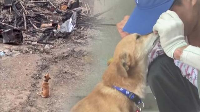 Tear-jerking reunion—dog lost his home to fire but he never gave up waiting for his owner