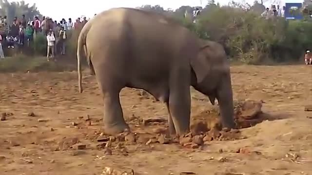 Mother spends 11 hours rescuing baby elephant stuck in well