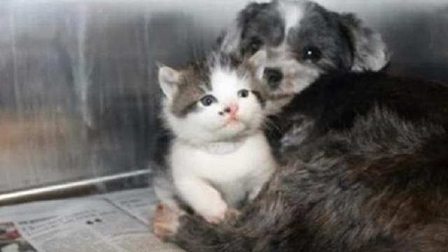 Abandoned dog is discovered nursing tiny kitten in ravine, their relationship will melt your heart