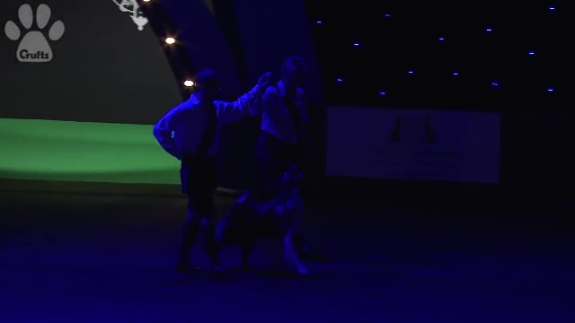 Couple prepares for 'Riverdance' routine but dog pulls stunt that utterly steals the show
