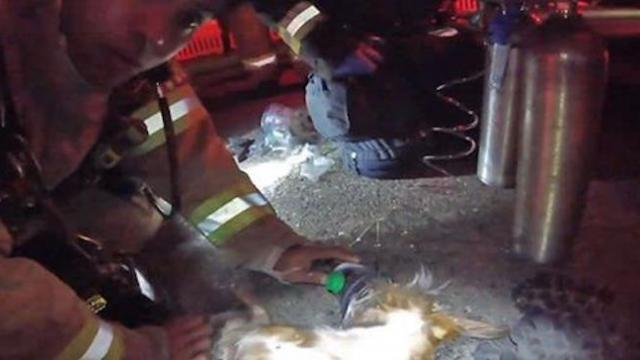 Firefighter body cam captures daring rescue of lifeless dog from burning home