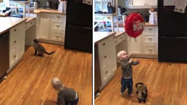 Watch adorable moment fussy toddler gets balloon back thanks to sweet cat