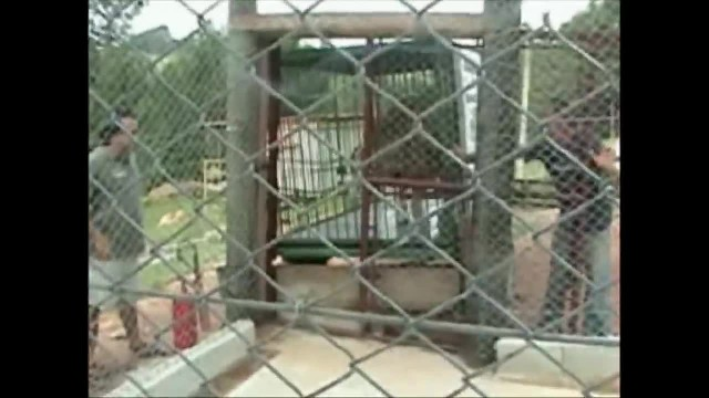 Sad circus lion spent 13 years locked in a tiny cage. Now watch when he's freed for the first time.