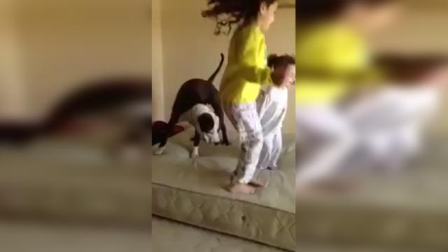 Watch this dog have a bouncing good time with two little girls!