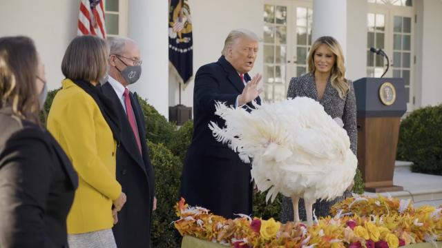 Presentation of the 2020 national Thanksgiving Turkey