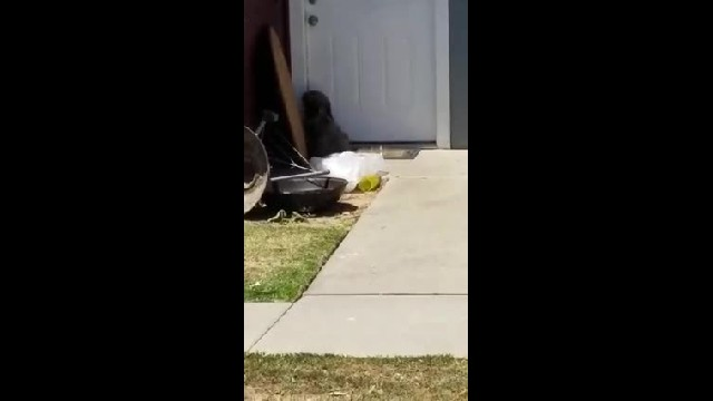 They Moved Away And Left Their Dog Crying At The Door. But Moments Later… Oh My