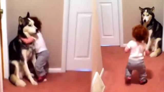 Dad flips on vacuum only to have baby steal show when she beelines straight towards her 'protector'