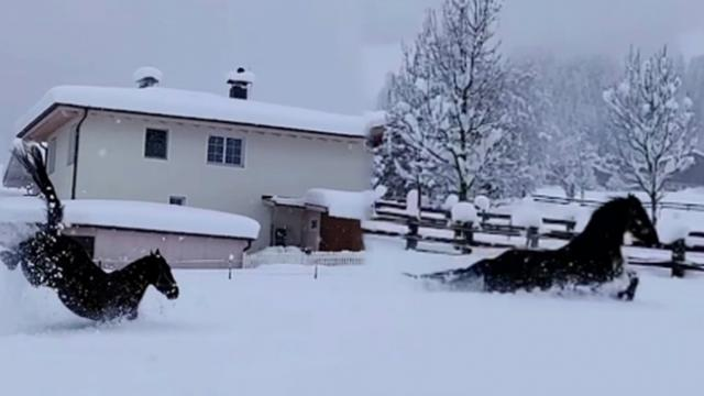 Horses have a blast dashing through the snow in viral video