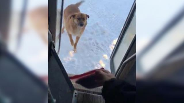 A hungry dog waits patiently every day for one very special bus driver