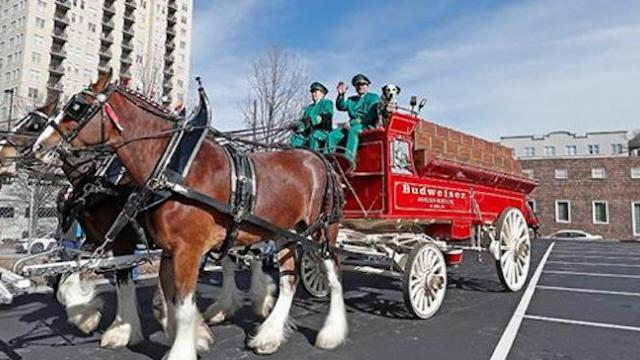 Budweiser Clydesdale ranch welcomes first foal of the year and