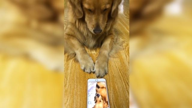 Dog watches video of himself snoring, owner can't stop laughing at his reaction