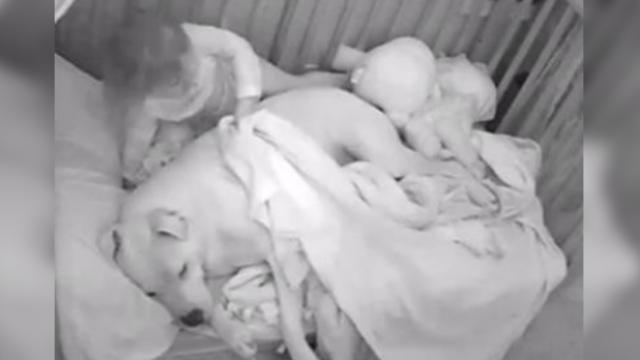 Nanny cam captures sweet moment little girl covers up pit bull body guard with blankie