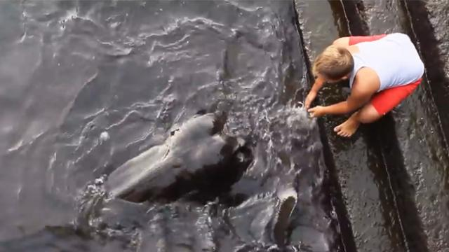 Video of giant stingray emerging from water to greet boy goes viral