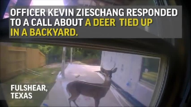 2 Days After Cop Saves Him, Deer Returns To Say Thank You To His Rescuer
